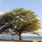 It's just a tree